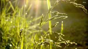 6637-grass-in-a-ray-of-light-1920x1080-nature-wallpaper